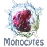 خلايا المونوسايتس التي تتسبب في أعراض القلق عند التعرض للضغوط
