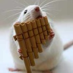 تحسن السمع بالعمى المؤقت في الفئران